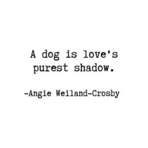 Read more about the article Are these Dog Quotes about me and my dog?