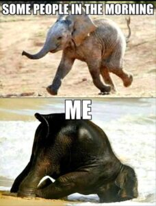 Read more about the article Funny Animal Pictures Of The Day – 20 Pics