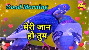 Read more about the article 😍Meri 🌹Jaan Ho Tum | Good morning shayari video | wishes for everyone