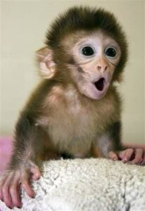 Read more about the article Monkeys born from eggs that got DNA swap