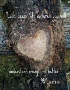 Read more about the article 60 Beautiful Mother Nature Quotes And Sayings
