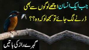 Read more about the article Amazing Collection Of Urdu Quotes | Urdu Quotes | Sunehri Aqwal | Urdu Hindi Quotes Status Video