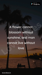 Read more about the article Love Quotes – Love Vibes