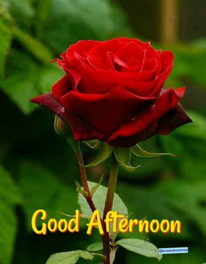 You are currently viewing #🎉 તહેવારોGood Afternoon @knowaboutnew🎉 તહેવારો By Know About New  on ShareChat – WAStickerApp, Status, Videos and Friends