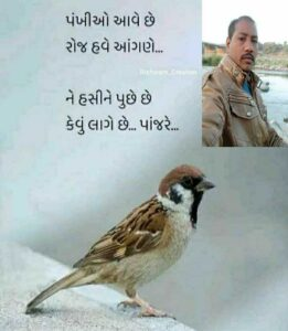 Read more about the article #🤓 રમુજી સ્ટેટ્સ🤓 રમુજી સ્ટેટ્સ By Taju bhai Baria on ShareChat – WAStickerApp, Status, Videos and Friends