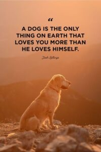 Read more about the article 40 Dog Quotes That Will Make Your Heart Melt