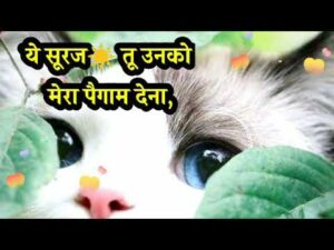 Read more about the article 7 मई शुभ शुक्रवार  Good morning shayari status video  good morning wis…  via @