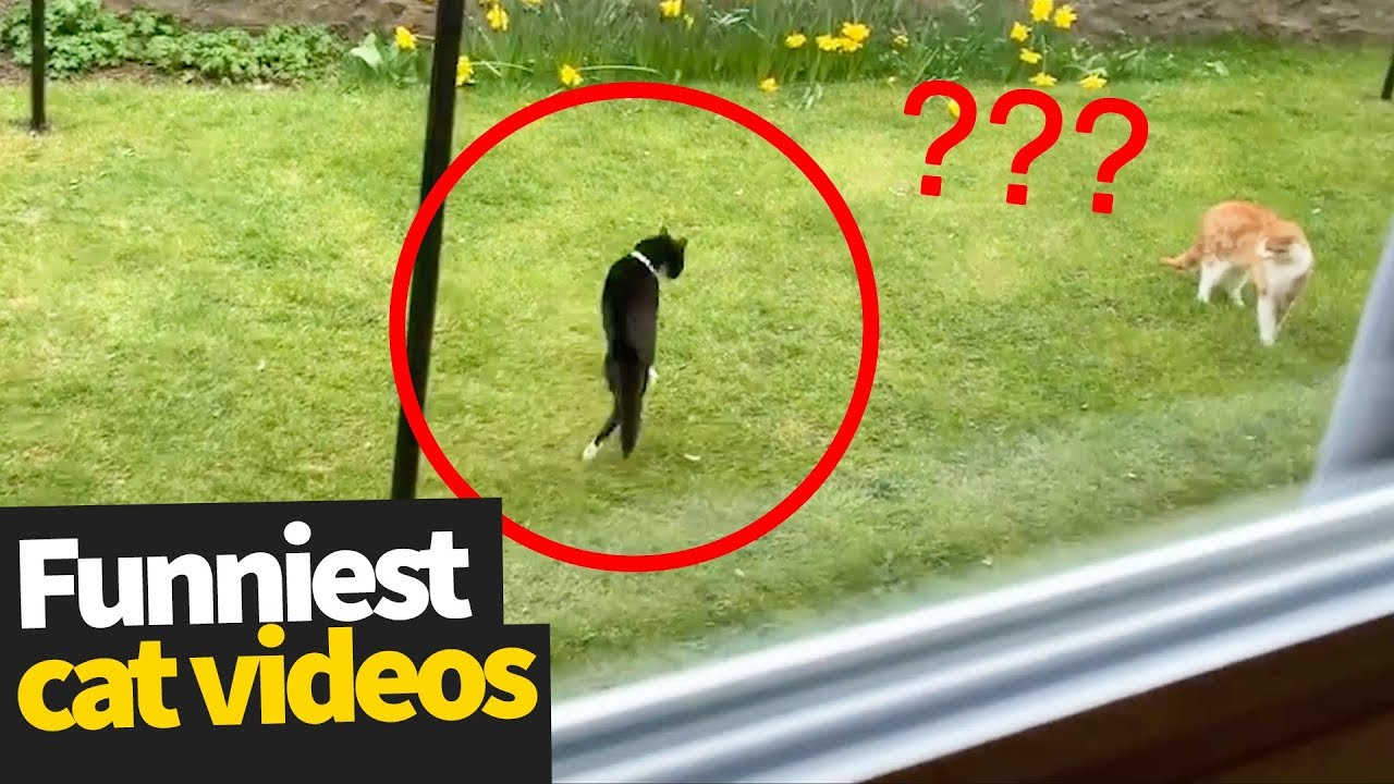 You are currently viewing Hilarious Cat Viral Videos | Ultimate Cat Compilation 2019