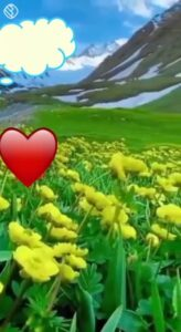 Read more about the article #🏞 ప్రకృతి అందాలు #🌼బ్యూటిఫుల్ Flowers🏞 ప్రకృతి అందాలు By srilakshmi on ShareChat – WAStickerApp, Status, Videos and Friends