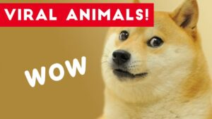 Read more about the article Viral Pets of Facebook and Instagram 2017   Funny Pet Videos