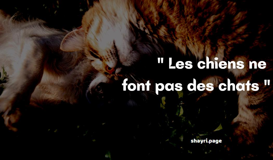 You are currently viewing French sayings about animals- Les chiens ne font