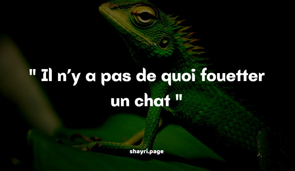 You are currently viewing Il n'y a pas de -French sayings about animals